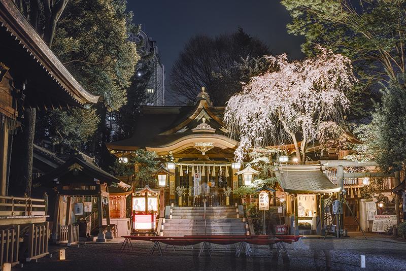 八王子 子安神社 ライトアップ