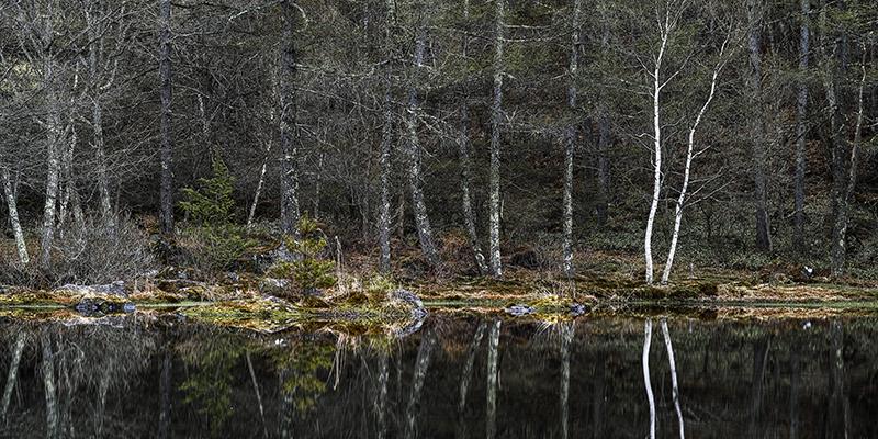 白駒の池nobiann